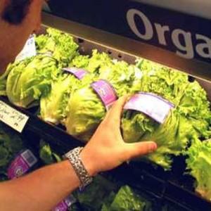 eko-hrana-proizvodnja